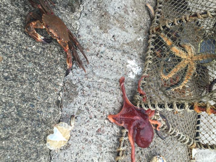 seafood-plattersmall